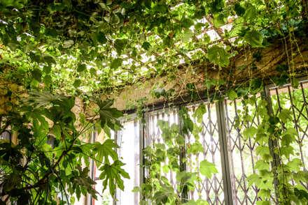Un romantico giardino d'inverno: Giardino d'inverno in stile in stile Rustico di Ginkgo Giardini