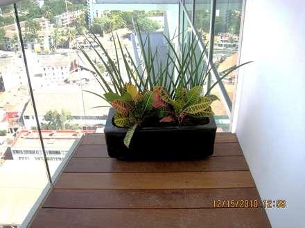 Jardines de estilo topical por Tropico Jardineria