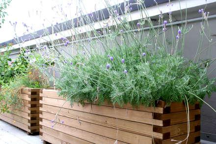 Lavanda in vaso: Terrazza in stile  di Atelier delle Verdure