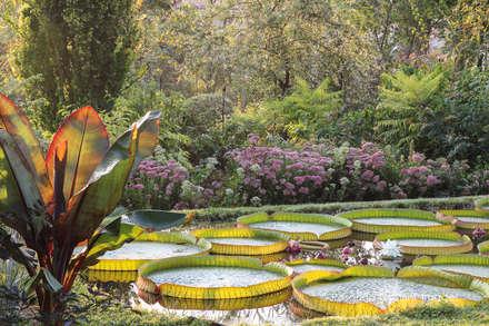 Domenico Montevecchi's Garden: Giardino in stile in stile Tropicale di Rosanna Castrini Garden Photography