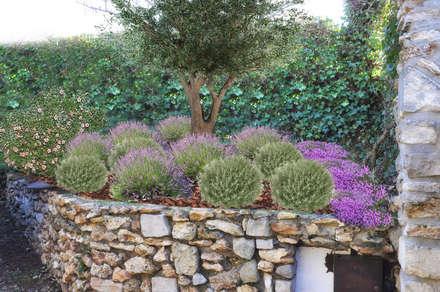Massif provençal: Jardin de style de style Méditerranéen par  Sophie Durin | Empreinte Paysagère