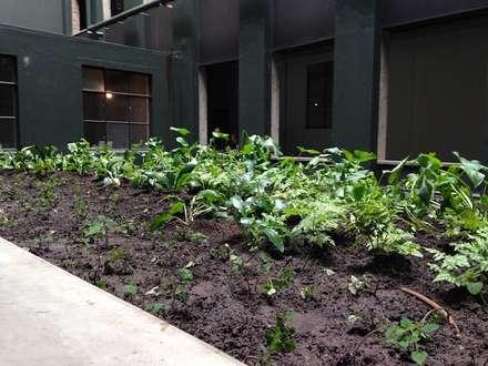 City Rooftop:  Commercial Spaces by Simon Clements: Garden & Landscape Design