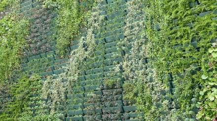 Façade végétalisée / Mur végétal extérieur VERTICAL FLORE: Maisons de style de style Tropical par Vertical Flore