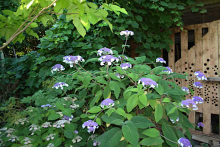 Samthortensie: tropischer Garten von Gartenarchitekturbüro Timm