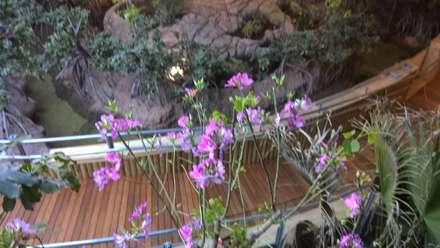 Detalle de Floración de Bauhinia.: Museos de estilo  de GreenerLand. Arquitectura Paisajista y Tematización