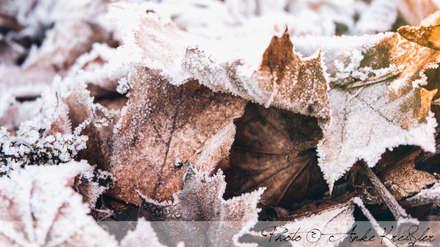 Laub im Winter: skandinavischer Garten von GARDOMAT - Die Gartenideenmacher