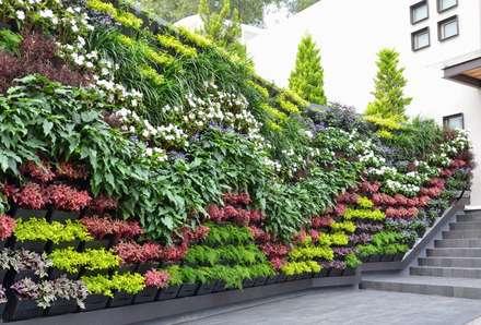 Muro Verde Pedregal Nubes: Jardines de estilo moderno por Regenera Mx - Fábrica Ecológica
