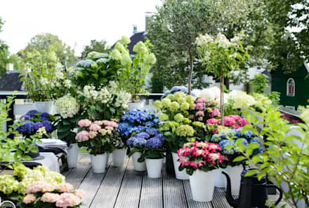 پھولوں کی حفاظت,:  راہ داری اور دالان by lancerisb