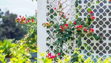 Casa de la Acacia: Jardines de estilo moderno por David Macias Arquitectura & Urbanismo