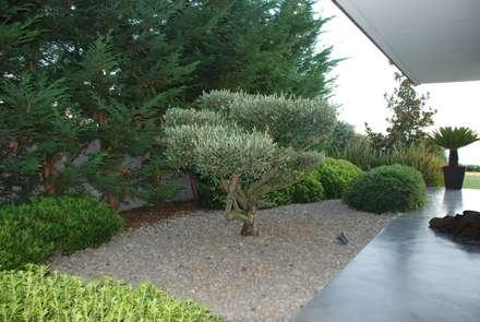Jardim Privado: Jardins modernos por Verde Esquisso Lda.