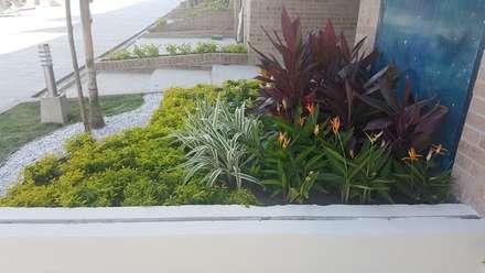 CONJUNTO ANCARES CAMPESTRE - BARRANQUILLA - COLOMBIA: Jardines de estilo tropical por BRASSICA SOLUCIONES PAISAJISTICAS S.A.S.