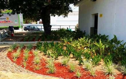 ALMACEN EXITO CALLE 76 - BARRANQUILLA - COLOMBIA: Jardines de estilo tropical por BRASSICA SOLUCIONES PAISAJISTICAS S.A.S.