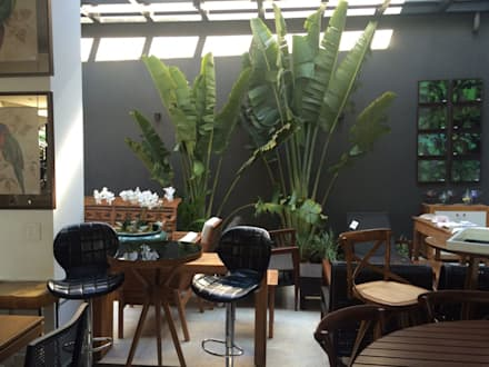 Loja Espaço Moderno : Jardins tropicais por Eneida Lima Paisagismo