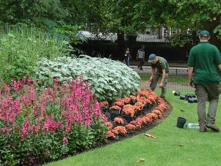 Ofertas: Jardines de estilo mediterráneo de Jardinería Agrotofran S.L.