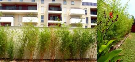 bambous: Jardin de style de style Tropical par Constans Paysage