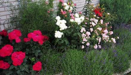 OGRÓD RÓŻANY: styl , w kategorii Ogród zaprojektowany przez MAGIA OGRODU