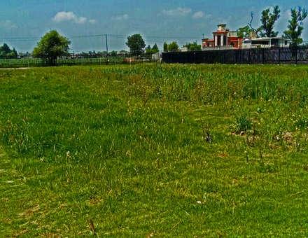 terranova Proyectos de Jardinería y Limpieza 의  앞마당