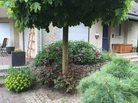 Mediterane Gartengestaltung mediterrane gartengestaltung ideen und bilder homify