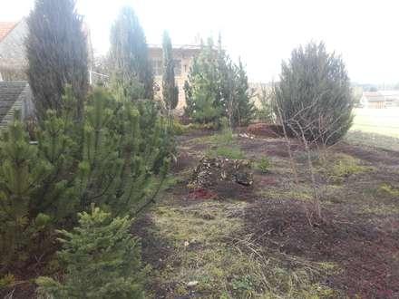 Bepflanzungen und Rasenanlagen: skandinavischer Garten von Garten-Landschaftsbau Hierreth-Felser GmbH