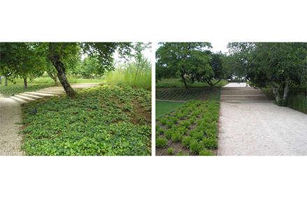 Habitação de Chamusca da Beira, Portugal: Jardins ecléticos por Margem Arquitectura Paisagista Lda