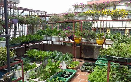 Chủ nhà đã sử dụng sân thượng làm vườn rau nhỏ cho gia đình.:  Hiên, sân thượng by Công ty TNHH Xây Dựng TM DV Song Phát