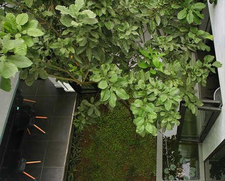 Ấn tượng độc đáo nhất của ngôi nhà được thể hiện ở không gian xanh.:  Hiên, sân thượng by Công ty TNHH Xây Dựng TM DV Song Phát