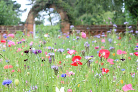 Wildflower meadow: country Garden by Daniel Shea Garden Design