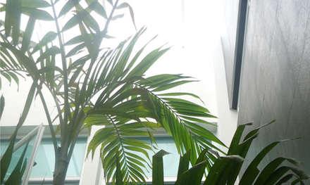Casa Vega aruachan: Jardines de estilo minimalista por mínimal arquitectura