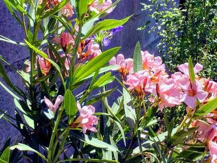 Detalle de Flores en jardineras: Jardines de estilo moderno por Deck and Garden