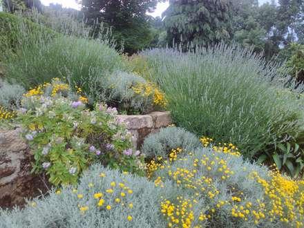 Jardim de aromáticas: Jardins mediterrânicos por andré nascimento-arquitetura paisagista