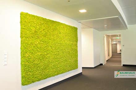 MOOSBEGRÜNUNG -  ISLAND MOOS:  Bürogebäude von BAUMHAUS GmbH   Raumbegrünung Pflanzenpflege
