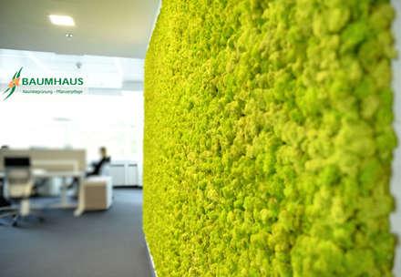Clínicas / Consultorios Médicos de estilo  por BAUMHAUS GmbH   Raumbegrünung Pflanzenpflege
