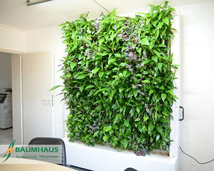 Grüne Wände im Büro oder die BAUMHAUS - Stand-Alone Pflanzwand:  Geschäftsräume & Stores von BAUMHAUS GmbH   Raumbegrünung Pflanzenpflege