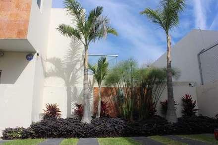 tropical Garden by Acua Natura