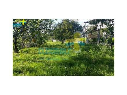 Terreno nas traseiras (1): Casas de campo  por Clix Mais