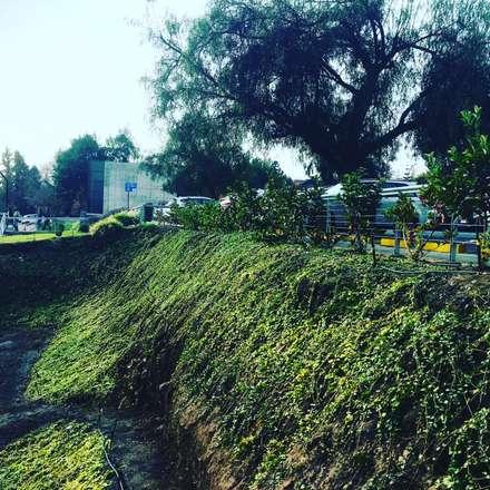 reformación de jardines Clínica UC San Carlos de Apoquindo : Clínicas / Consultorios Médicos de estilo  por Agroinnovacion paisajismo sustentable