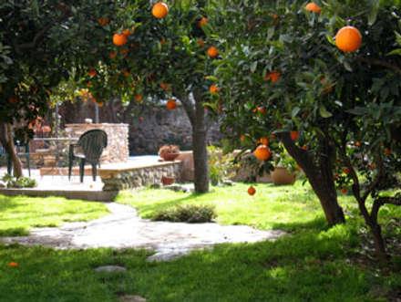Naranjo en el jardín: Jardines con piedras de estilo  de Mirasur Proyectos S.L.