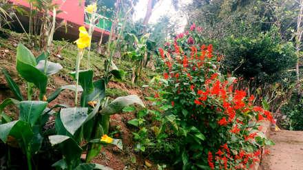 Jardines japoneses de estilo  de Oria Arquitetura & Construções