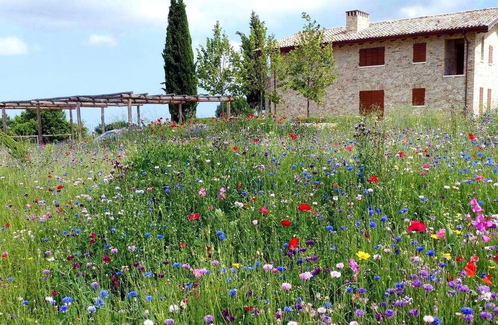 Giardini di campagna: giardino in stile in stile rustico di lucio