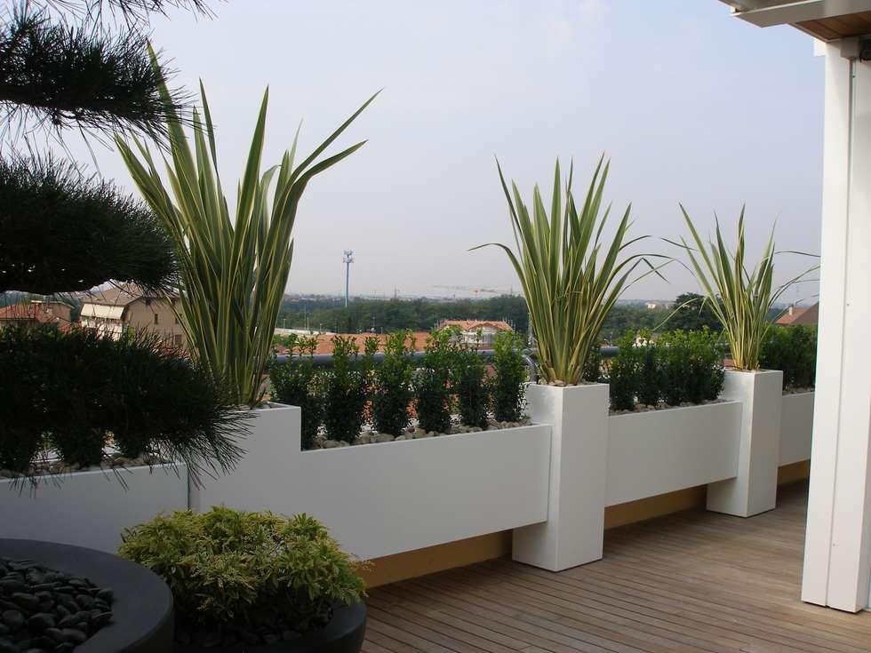 Piante come sculture (foto 2): Terrazza in stile  di Midori srl