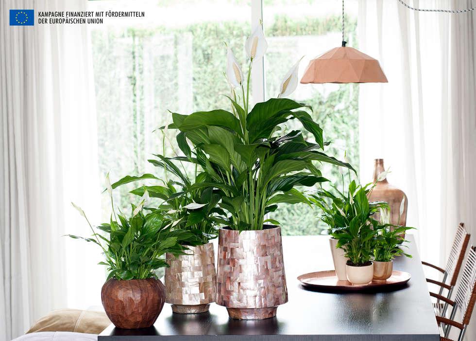 Interior landscaping by Pflanzenfreude.de