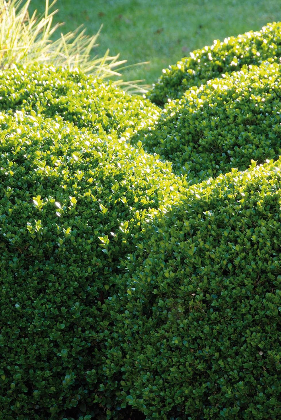Sommergarten: klassischer Garten von Pflanzenfreude.de