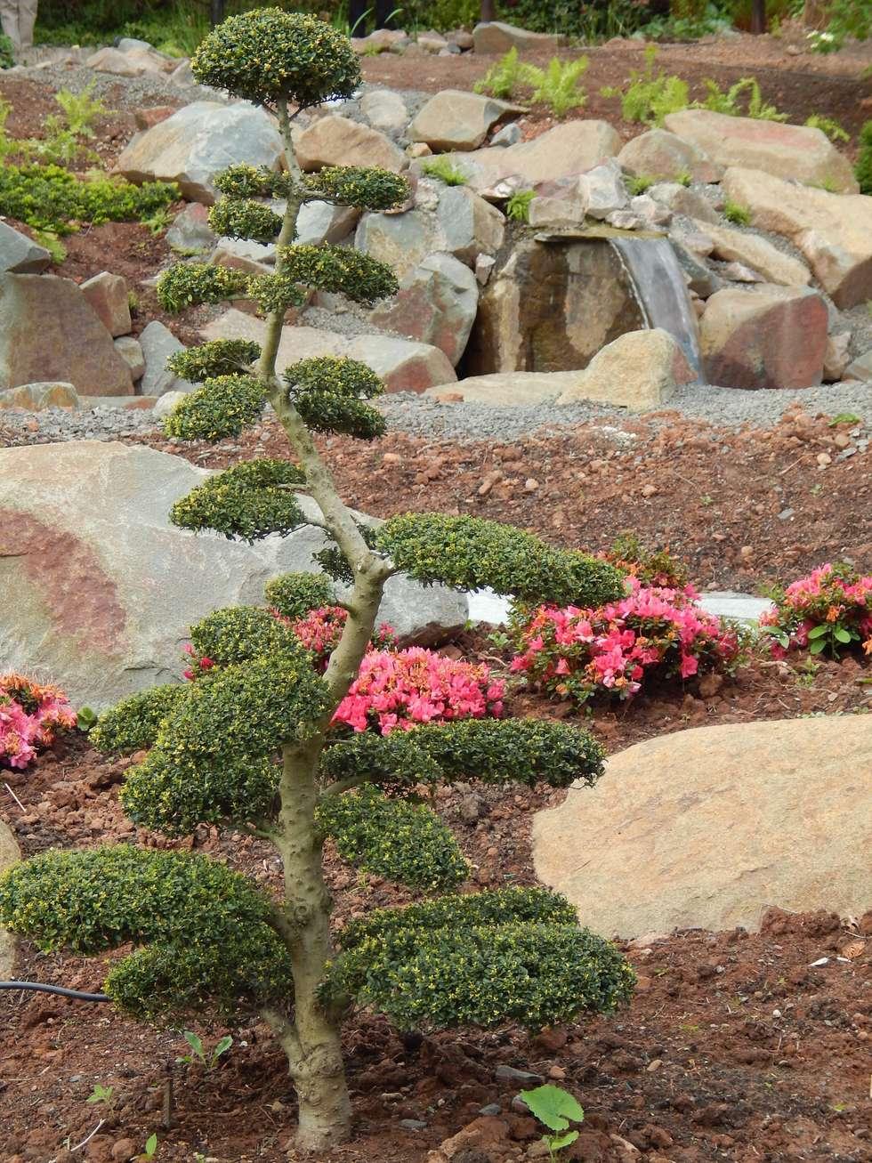 asiatischer Garten: asiatischer Garten von jwgartendesign