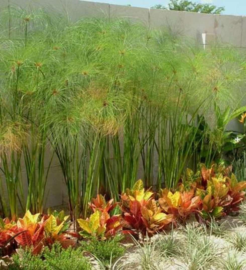 Fotos de jardines de estilo moderno de ecoentorno ...
