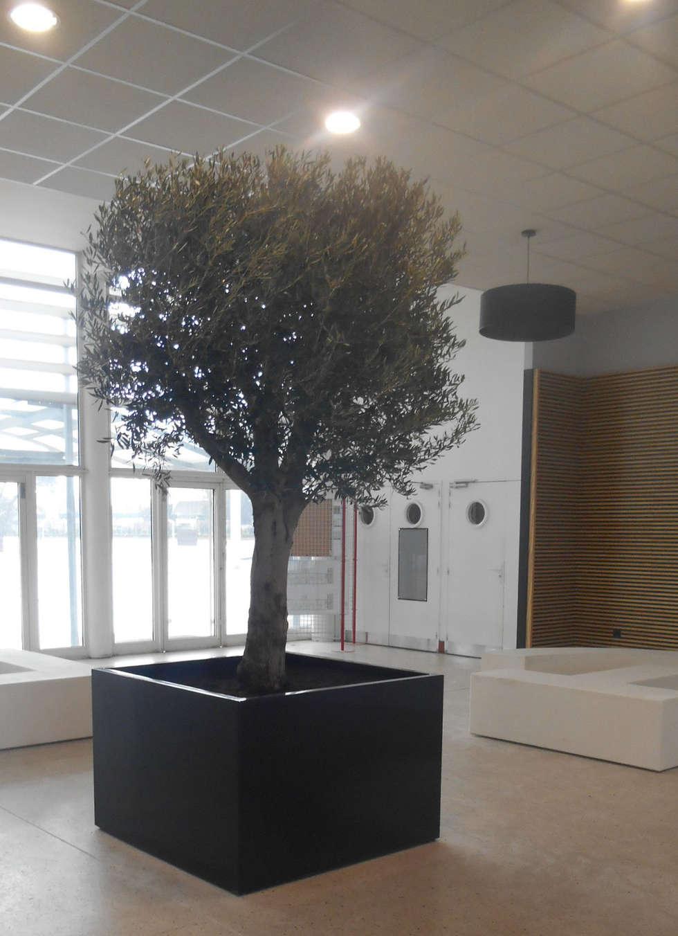 """Le bac à arbre """" Indoor """" - Image'In: Bureau de style de style Méditerranéen par ATELIER SO GREEN"""
