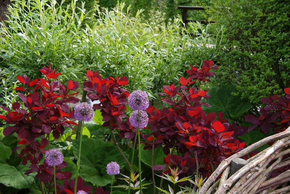 Kleur en vorm: moderne Tuin door Ontwerpstudio Angela's Tuinen