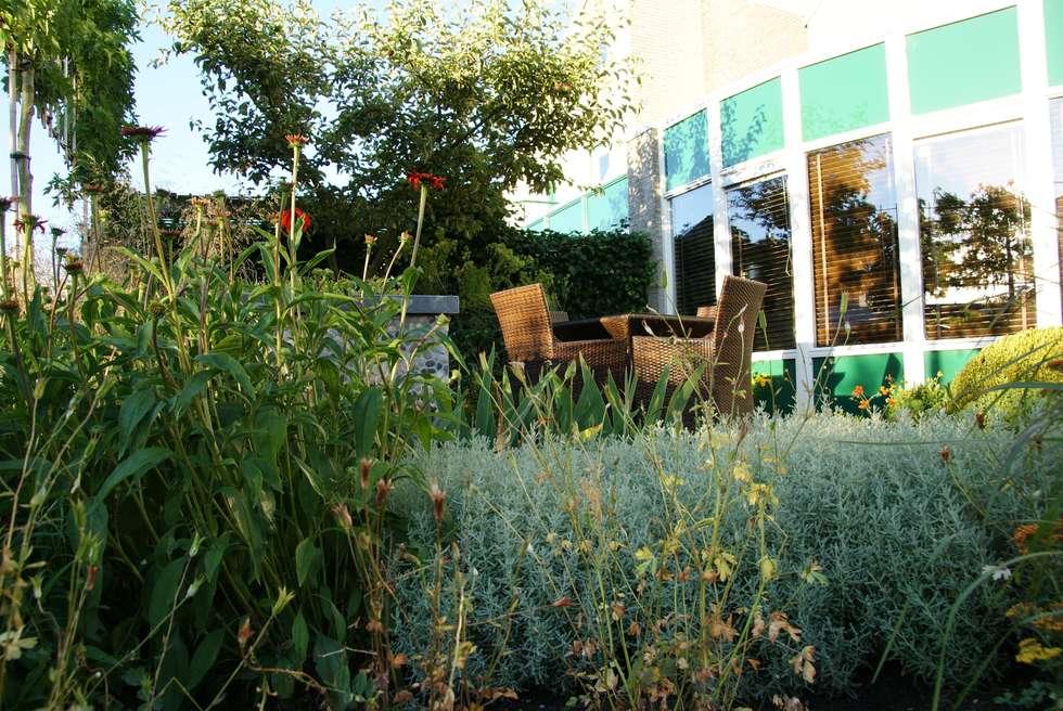Wintergroen: moderne Tuin door Ontwerpstudio Angela's Tuinen