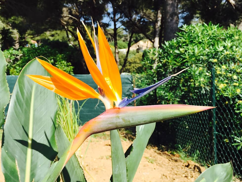 Massif médittéranéen : Jardin de style de style Méditerranéen par In&Out Garden