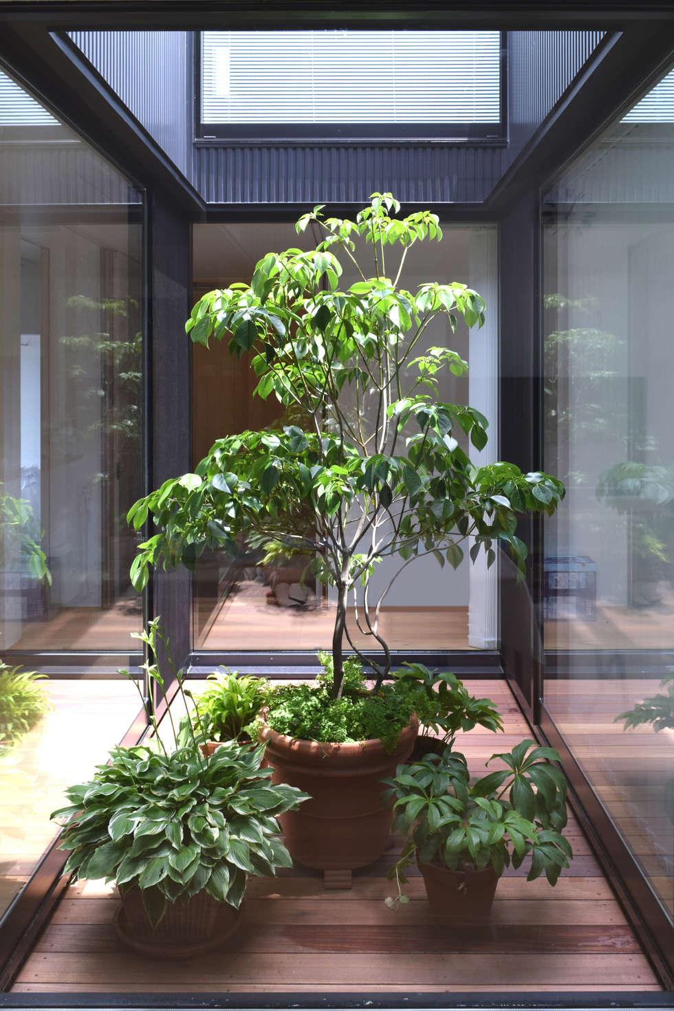 光庭と植物: FURUKAWA DESIGN OFFICEが手掛けた庭です。