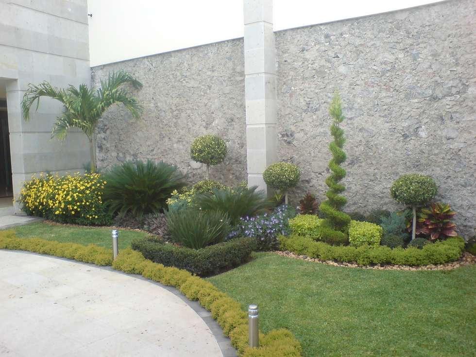 Ideas im genes y decoraci n de hogares homify for Jardines con palmeras